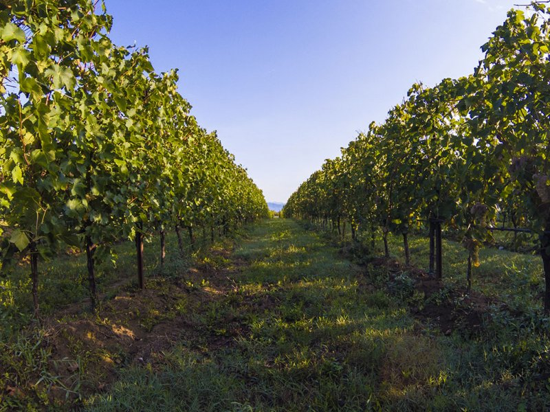 The indissoluble link between wine and its terroir